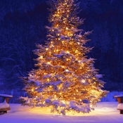 christmas-tree-with-snow-and-lights1