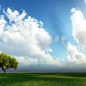 pictures-of-tree-under-sky-images